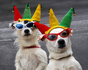 bigstock_Dogs_Clowning_Around_3695519